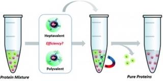 GlycoMNPs